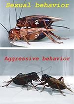 Sexual and Aggressive behavior